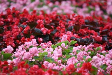 flowers-1664811_960_720.jpg
